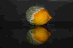 Moldy lemon